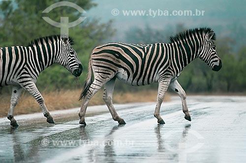 Assunto: Zebras no Parque Nacional Kruger / Local: África do Sul - África / Data: 2004