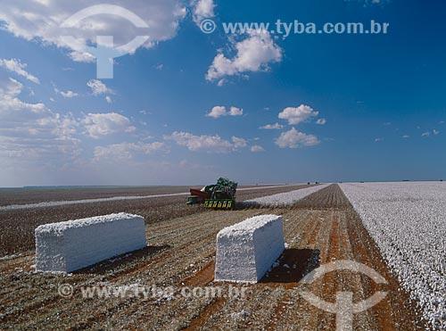 Assunto: Fardos de algodão com colheitadeira ao fundo / Local: Diamantino - Mato Grosso (MT) - Brasil / Data: 2009