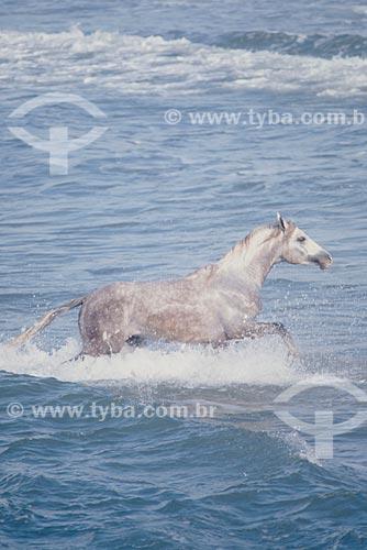 Assunto: Cavalo no mar / Local: Torres - Rio Grande do Sul (RS) - Brasil / Data: 2005