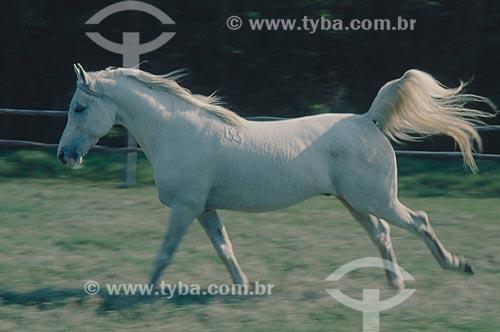 Assunto: Cavalo correndo no campo  / Local: Rio Grande do Sul (RS) - Brasil / Data: 2005