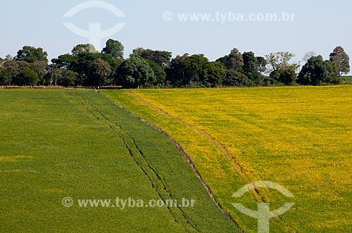 Assunto: Plantação de soja na área rural de Não-me-toque / Local: Não-me-Toque - Rio Grande do Sul (RS) - Brasil / Data: 03/2011
