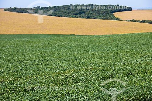Assunto: Plantação de soja com mata de reserva legal ao fundo na área rural de Carazinho / Local: Carazinho - Rio Grande do Sul (RS) - Brasil / Data: 03/2011
