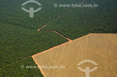 Assunto: Vista aérea de área preservada e área desmatada para agropecuária no meio de cerradão / Local: Querência - Mato Grosso (MT) - Brasil / Data: 07/2011
