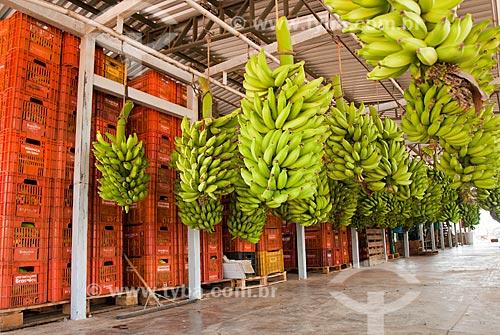 Assunto: Armazém de beneficiamento de bananas no Projeto Jaíba - Projeto de irrigação com captação de água do Rio São Francisco / Local: Distrito Mocambinho - Jaíba - Minas Gerais (MG) - Brasil / Data: 09/2011