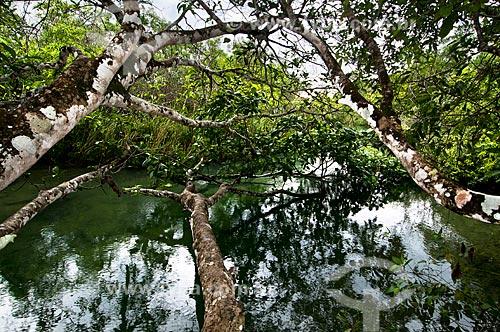 Assunto: Vegetação sobre o Rio Formoso / Local: Bonito - Mato Grosso do Sul (MS) - Brasil / Data: 10/2010