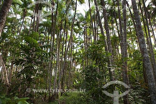 Assunto: Projeto Encauchados Vegetais, trilha na floresta - Reserva Extrativista Cazumbá / Local: Sena Madureira - Acre (AC) - Brasil / Data: 11/2011