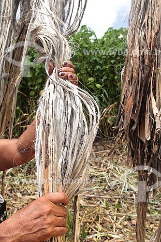 Assunto: Colheita de Juta / Local: Manacapuru - Amazonas (AM) - Brasil / Data: 01/2012