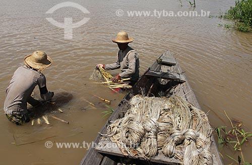 Assunto: Colheita e transporte de Juta no Rio Amazonas / Local: Manacapuru - Amazonas (AM) - Brasil / Data: 01/2012