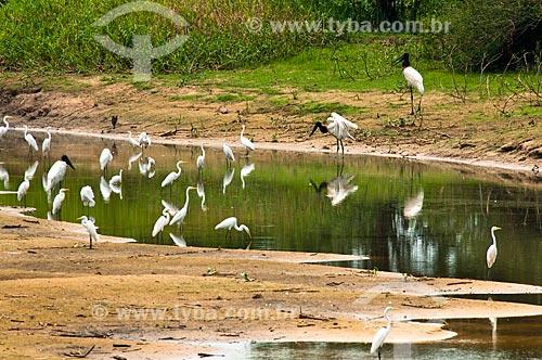 Assunto: Tuiuiú e Garça-branca-grande próximos a um rio / Local: Corumbá - Mato Grosso do Sul (MS) - Brasil / Data: 10/2010