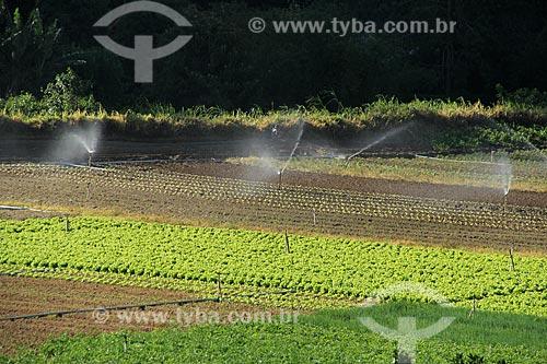 Assunto: Plantação de hortaliças na Região Serrana Fluminense - Estrada Teresópolis-Friburgo  / Local: Vargem Grande - Teresópolis - Rio de Janeiro (RJ) - Brasil / Data: 02/2012