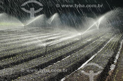 Assunto: Irrigação em plantação de hortaliças na Região Serrana Fluminense - Estrada Teresópolis-Friburgo  / Local: Vargem Grande - Teresópolis - Rio de Janeiro (RJ) - Brasil / Data: 02/2012