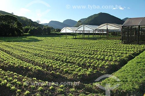 Assunto: Plantação de alface crespa na Região Serrana Fluminense - Estrada Teresópolis-Friburgo  / Local: Teresópolis - Rio de Janeiro (RJ) - Brasil / Data: 02/2012