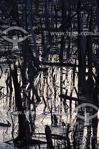 Assunto: Floresta queimada na estrada Manaus-Itacoatiara (AM-010) - KM 182 sentido Itacoatiara  / Local: Amazonas (AM) - Brasil / Data: 10/2011