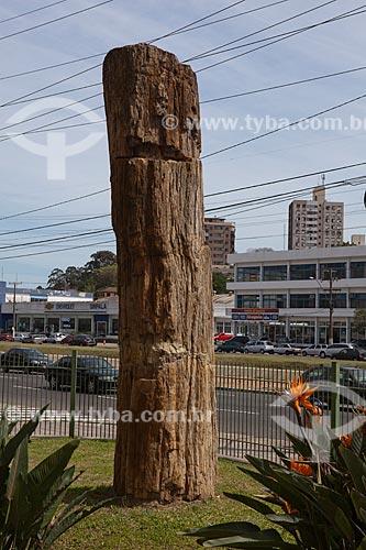 Assunto: Árvore fossilizada na fachada do Museu de Ciência e Tecnologia da PUC-RS (Conífera Fossil) - Exemplar raro com 220 milhões de anos  / Local: Porto Alegre - Rio Grande do Sul (RS) - Brasil  / Data: 09/2011