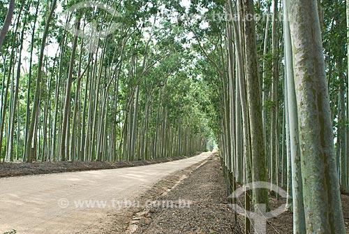 Assunto: Plantação de eucaliptos / Local: Capivari do Sul - Rio Grande do Sul (RS) - Brasil / Data: 2010