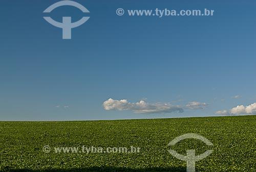 Assunto: Plantação de soja / Local: Cruz Alta - Rio Grande do Sul (RS) - Brasil / Data: 2009