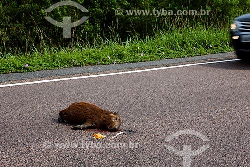 Assunto: Capivara morta na Rodovia BR-471 / Local: Santa Vitória do Palmar - Rio Grande do Sul (RS) - Brasil / Data: 02/2012