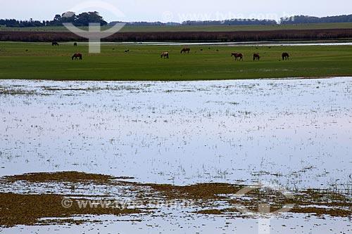 Assunto: Estação Ecológica do Taim - Banhados  (áreas alagadas permanente ou temporariamente) / Local: Santa Vitória do Palmar - Rio Grande do Sul (RS) - Brasil / Data: 02/2012