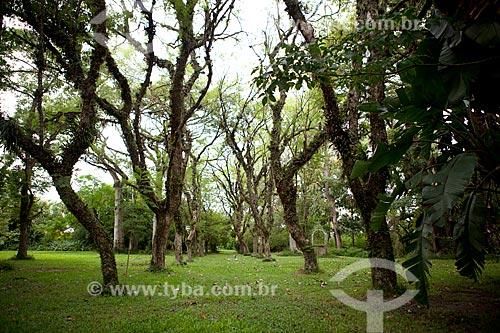 Assunto: Jacarandás nos jardins da Charqueada Santa Rita / Local: Pelotas - Rio Grande do Sul (RS) - Brasil / Data: 02/2012