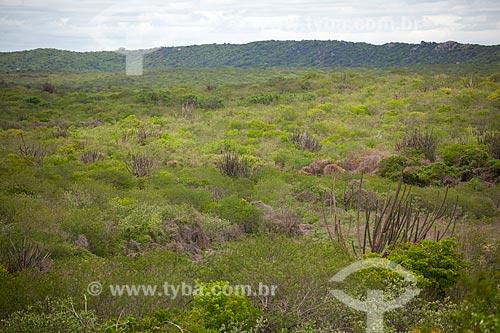 Assunto: Facheiro no semiárido potiguar / Local: Caiçara do Rio do Vento  -  Rio Grande do Norte  ( RN )   -  Brasil / Data: 03/2012
