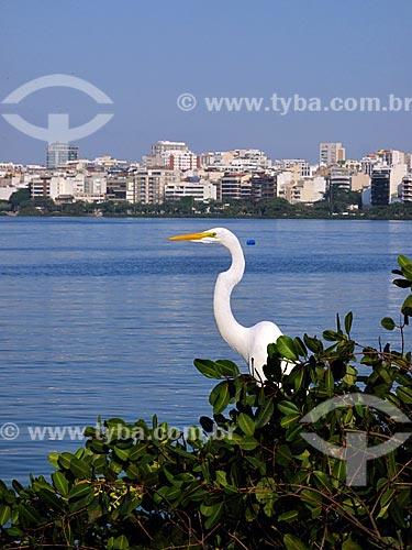 Assunto: Garça na orla da Lagoa Rodrigo de Freitas                         / Local: Lagoa - Rio de Janeiro (RJ) - Brasil / Data: 05/2012