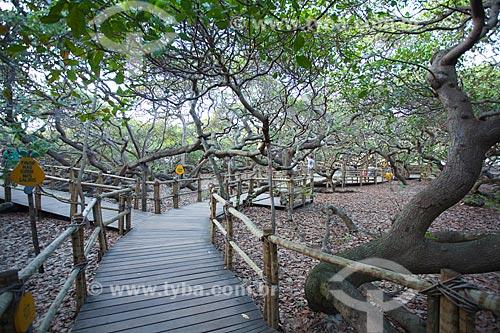 Assunto: Cajueiro de Pirangi - Considerado o maior cajueiro do mundo / Local: Parnamirim - Rio Grande do Norte (RN) - Brasil / Data: 03/2012