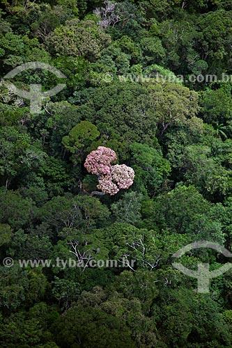 Assunto: Vista aérea da Floresta Amazônica - Parque Nacional Montanhas do Tumucumaque / Local: Amapá (AP) - Brasil / Data: 04/2012