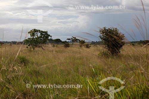 Assunto: Vegetação de cerrado na Área de Proteção Ambiental do Rio Curiaú / Local: Macapá - Amapá (AP) - Brasil / Data: 04/2012