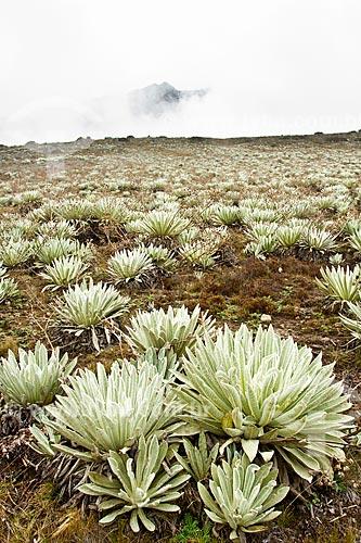 Assunto: Paisagem típica dos páramos no Parque Nacional Sierra de la Culata - Ecossistema encontrado em grandes altitudes do noroeste da América do Sul  / Local: Mérida - Mérida - Venezuela - América do Sul / Data: 05/2012