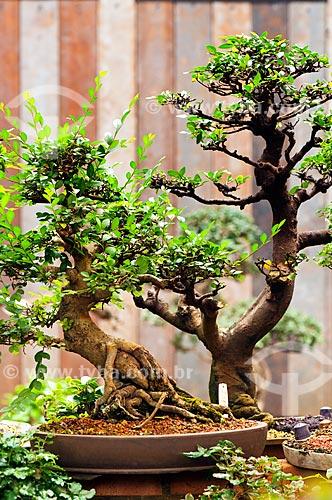 Assunto: Árvore Bonsai / Local: Rio de Janeiro (RJ) - Brasil / Data: 04/2011