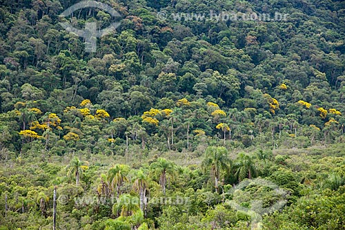 Assunto: Floresta de Acácias  / Local: Apiaí - São Paulo (SP) - Brasil / Data: 02/2102