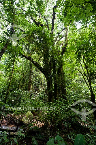Assunto: Árvore no Parque Estadual Turístico do Alto Ribeira / Local: Apiaí - São Paulo (SP) - Brasil / Data: 02/2012