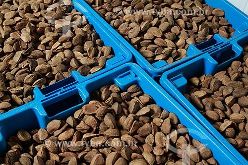 Assunto: Caixa com castanhas - Na fazenda Aruanã / Local: Itacoatiara - Amazonas (AM) - Brasil / Data: 06/2012