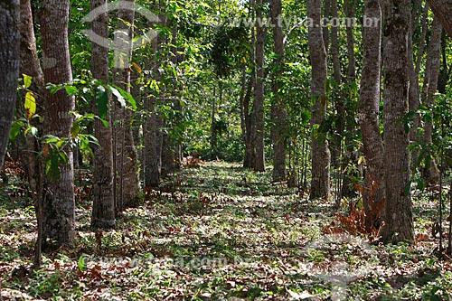 Assunto: Plantação de castanheiras na fazenda Aruanã / Local: Itacoatiara - Amazonas (AM) - Brasil / Data: 06/2012