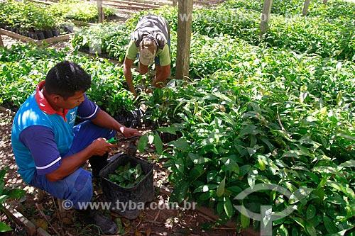 Assunto: Mudas de castanheiras na fazenda Aruanã / Local: Itacoatiara - Amazonas (AM) - Brasil / Data: 06/2012