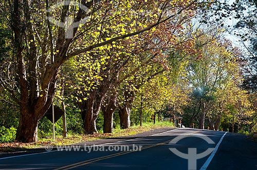 Assunto: Estrada Rota Romântica na BR - 116 / Local: Nova Petrópolis - Rio Grande do Sul (RS) - Brasil / Data: 06/2012