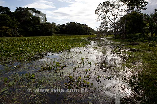 Assunto: Área de Proteção Ambiental do Rio Curiaú - Lago abastecido por canais naturais do Rio Amazonas / Local: Macapá - Amapá (AP) - Brasil / Data: 04/2012