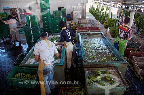 Assunto: Armazém de beneficiamento de bananas no Vale do Ribeira - lavagem das bananas em solução floculante de sulfato de alumínio e detergente neutro  / Local: Jacupiranga - São Paulo (SP) - Brasil  / Data: 02/2012