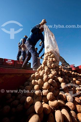 Assunto: Descarregamento de batatas no caminhão feito por trabalhadores rurais / Local: Casa Branca - São Paulo (SP) - Brasil  / Data: 06/2011