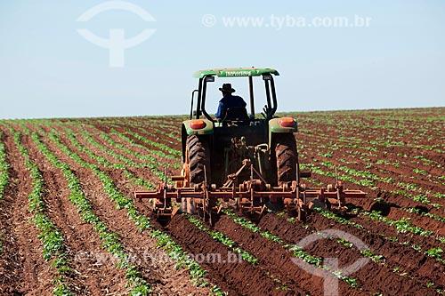 Assunto: Trator enleirando plantação de batatas na zona rural de Casa Branca  / Local: Casa Branca - São Paulo (SP) - Brasil  / Data: 06/2011
