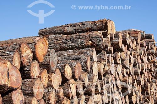 Assunto: Toras de pinus cortadas e empilhadas na zona rural de Itaberá / Local: Itaberá - São Paulo (SP) - Brasil / Data: 08/2011