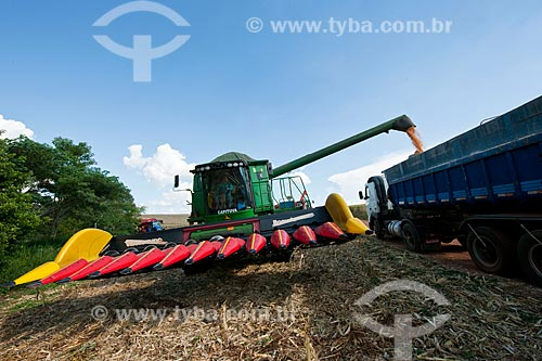 Assunto: Descarregamento de milho na zona rural de Itapeva  / Local: Itapeva - São Paulo (SP) - Brasil / Data: 02/2012