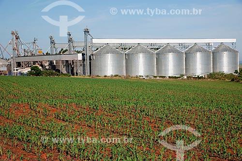 Assunto: Silos da Cooperativa Castrolânia na zona rural de Itaberá com plantação de milho na frente / Local: Itaberá - São Paulo (SP) - Brasil / Data: 02/2012