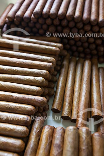 Assunto: Charutos - Don Francisco Charutos - Tabaco mata fina / Local: Fazenda Campo Verde - Cruz das Almas - Bahia (BA) - Brasil / Data: 07/2012