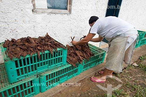 Assunto: Processo de beneficiamento das folhas de tabaco para produção de charutos - Don Francisco Charutos - Tabaco mata fina / Local: Fazenda Campo Verde - Cruz das Almas - Bahia (BA) - Brasil / Data: 07/2012