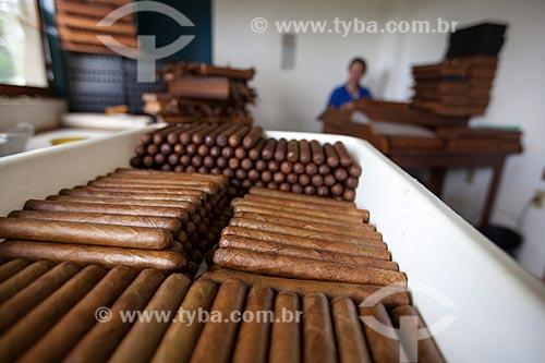Assunto: Produção de charutos - Don Francisco Charutos - Tabaco mata fina / Local: Fazenda Campo Verde - Cruz das Almas - Bahia (BA) - Brasil / Data: 07/2012