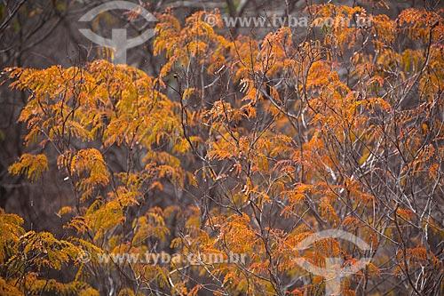 Assunto: Paisagem de árvores na caatinga no sertão de Pernambuco / Local: Jatobá - Pernambuco (PE) - Brasil / Data: 06/2012