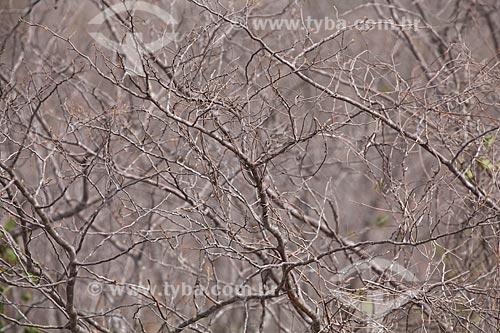 Assunto: Paisagem de vegetação típica da caatinga no sertão de Pernambuco / Local: Jatobá - Pernambuco (PE) - Brasil / Data: 06/2012