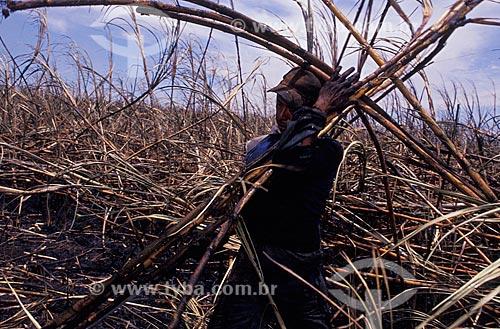 Assunto: Indígena trabalhando na usina de cana / Local: Mato Grosso do Sul (MS) - Brasil / Data: 04/2007