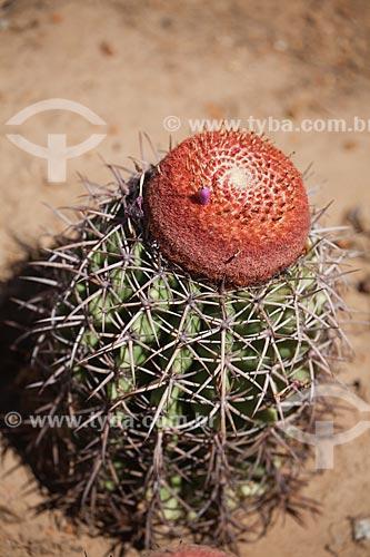Assunto: Cacto coroa-de-frade (Melocactus zehntneri) no sertão de Pernambuco / Local: Petrolina - Pernambuco (PE) - Brasil / Data: 06/2012